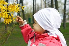 Little Girl Looking at Yellow Flowers. Little Girl Looking at or Showing Yellow Flowers Royalty Free Stock Image