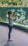 Little girl looks at the aquarium and takes pictures of big fish. With a mobile phone stock photos