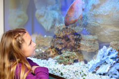 Little girl looks at big fish swimming in aquarium. Shallow depth of field royalty free stock photos