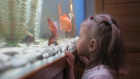 A little girl looks at the fish swimming in the aquarium with curiosity. stock footage