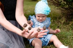 Mom throws cones in her hands showing their daughter. The little girl looks at the flying cones in the hands of her mother with distrust. they sit on the grass royalty free stock images