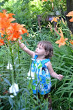 The little girl looks at garden lilies Royalty Free Stock Photos