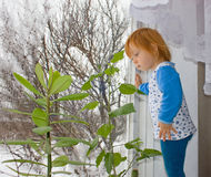 A little girl looks  out a window. Of her home Stock Image
