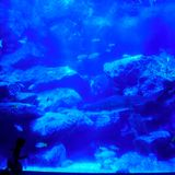 Little girl looks at shark in beautiful blue aquarium stock photography