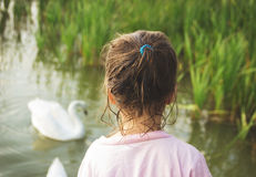 Little girl looks on a swan standing at water Royalty Free Stock Photos