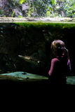 Little girl looks at a turtle in aquarium stock photos