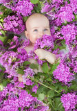 Little girl lying in flowers phlox. Sniffing and smiling Stock Images