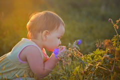 Little girl in a meadow Royalty Free Stock Photo