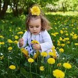 Little girl meadow gather yellow dandelion. A little girl reaps yellow dandelion sunny spring day Stock Images
