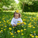 Little girl meadow gather yellow dandelion. A little girl reaps yellow dandelion sunny spring day Royalty Free Stock Photography