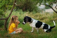 Little girl and mongrel dog outdoors royalty free stock image
