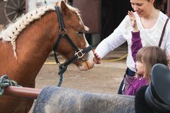 Little girl with mother and brown horse royalty free stock image