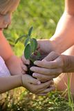 Little girl and mother holding a plant Stock Photography