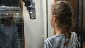 Little girl in museum. Little girl exploring expositions in museum stock footage