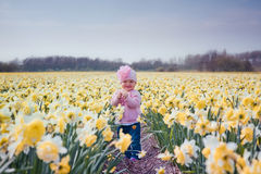 Little girl in narcissus field Stock Photography