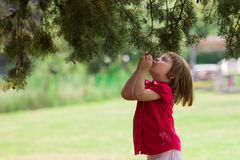 Little girl on nature Stock Photos