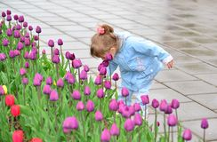 Little girl near the flower beds with tulips. Little girl near the flower beds with a tulips Stock Photo