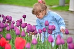 Little girl near the flower beds with tulips. Little girl near the flower beds with a tulips Royalty Free Stock Photo