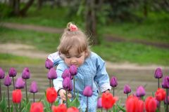 Little girl near the flower beds with tulips Royalty Free Stock Photography