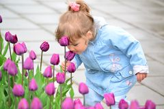 Little girl near the flower beds with tulips Royalty Free Stock Image