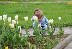 Little girl near the flower beds with tulips Royalty Free Stock Photo
