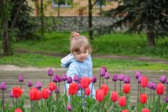 Little girl near the flower beds with tulips Stock Images