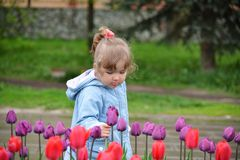 Little girl near the flower beds with tulips. Little girl near the flower beds with a tulips Stock Photos