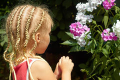 Little girl near the Hesperis plant Stock Images