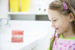 Little girl observing model of human jaw with braces Stock Photo