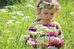 Little Girl On Glade Among Flowers Royalty Free Stock Photo