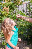 Little girl opened her mouth and catches from the. Hands of moms cherry. This image has attached release Stock Images