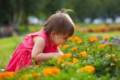 Little girl in orange flowers Royalty Free Stock Photo