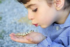 Little girl palying with silkworm in hands Stock Photo