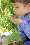 Little girl palying with silkworm in hands Royalty Free Stock Image
