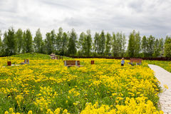 Little girl in park overgrown with dandelions Stock Image