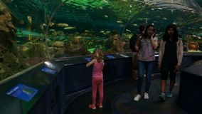 Little Girl and People in an Underwater Tunnel Aquarium. Toronto, Ontario. May, 2017. A little girl looks at the fish in an underwater tunnel as people walk by stock video footage