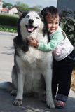 Little girl with pet. Husky in countryside outdoor Royalty Free Stock Image