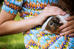 Little girl petting guinea pig Royalty Free Stock Images
