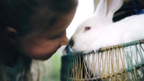 Little girl petting rabbit and laughing. A little girl on a green lawn stroking the nose of a cute white rabbit, laughs and gets a lot of positive emotions. 4k