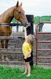 Little girl petting a very big horse Stock Image