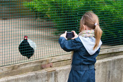 A little girl photographed pheasant. Stock Photo