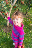 Little girl picked apples Royalty Free Stock Photos