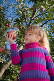 Little girl picked apples royalty free stock images