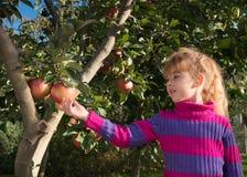 Little girl picked apples stock image