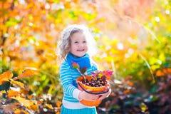Little girl picking acorns in autumn park Stock Photography