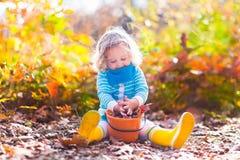 Little girl picking acorns in autumn park Stock Images