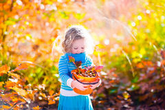 Little girl picking acorns in autumn park Royalty Free Stock Photos