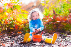 Little girl picking acorns in autumn park Royalty Free Stock Photography