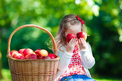 Little girl picking apples Royalty Free Stock Photo