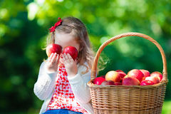 Little girl picking apples Stock Photography